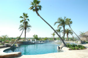 Swaying Palms Over Pool