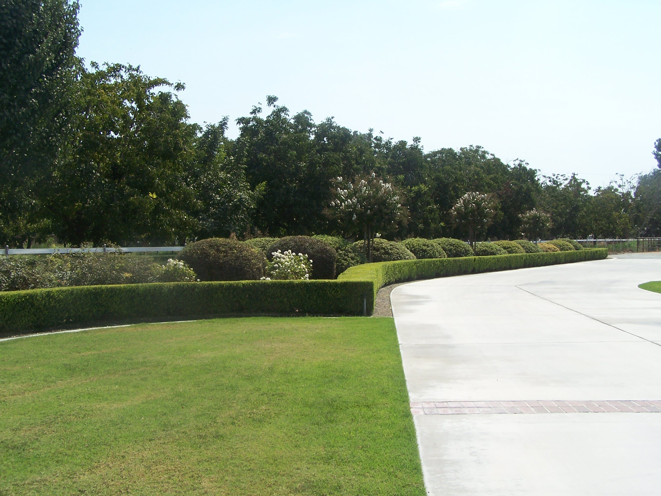 Neat Bushes and Hedges in Manicured Landscape