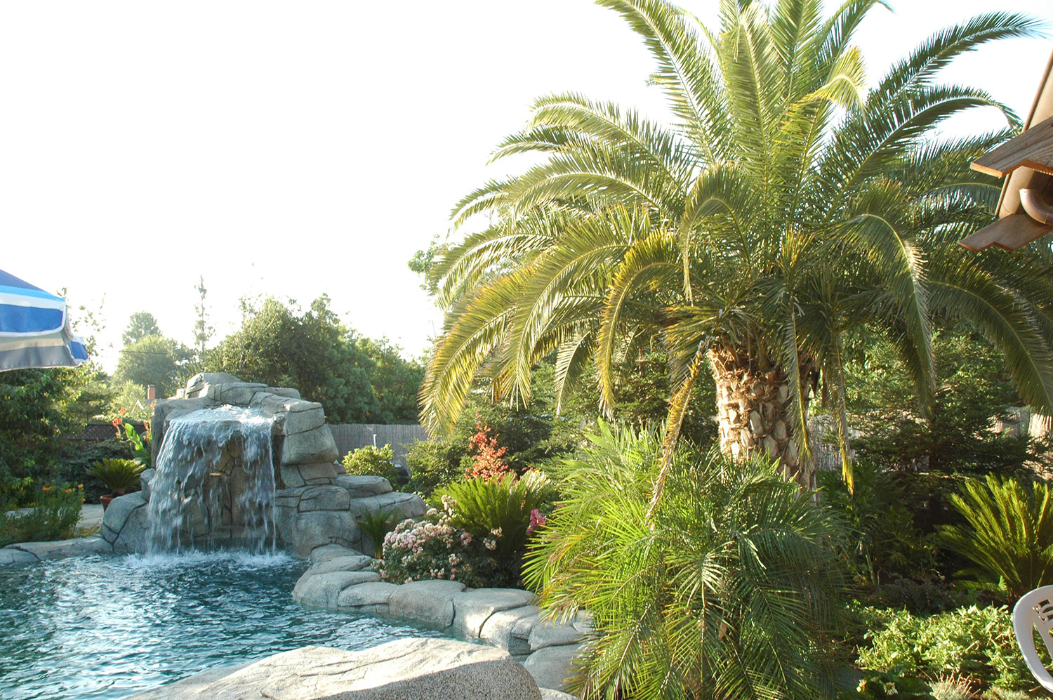 Eclectic Garden by Pool