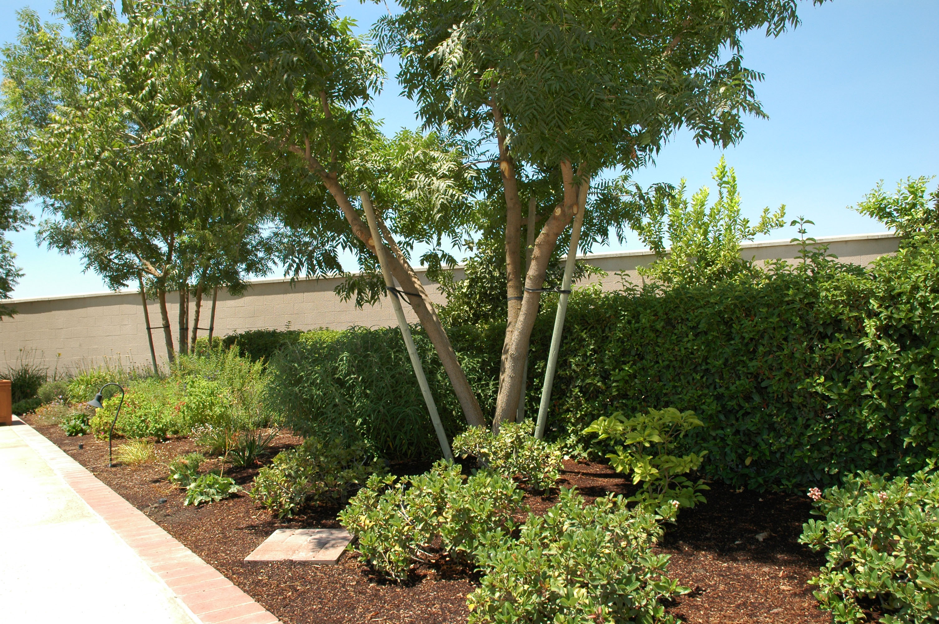 Traditional Plantings
