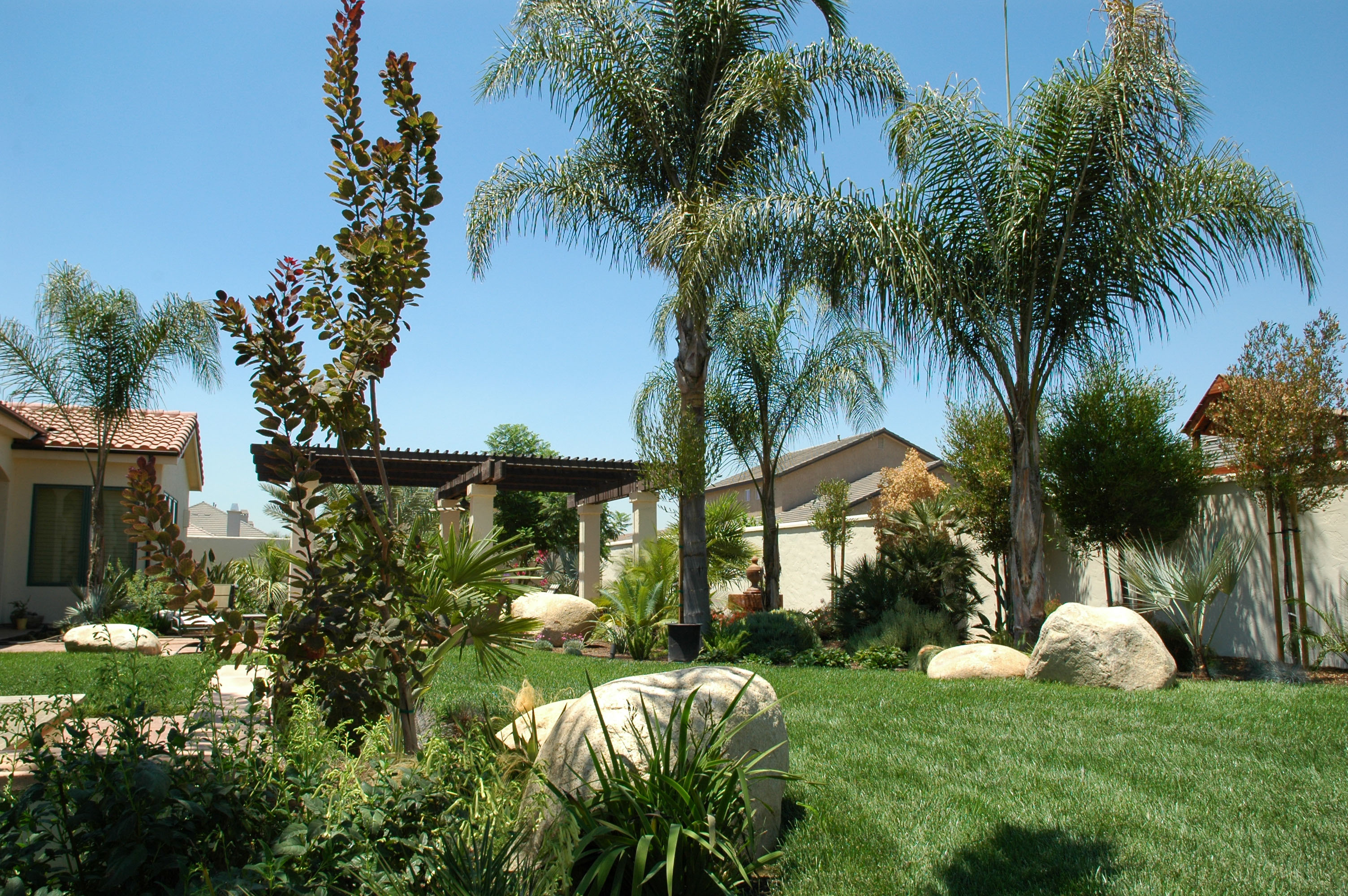 Palms and Boulders in Backyard Landscape