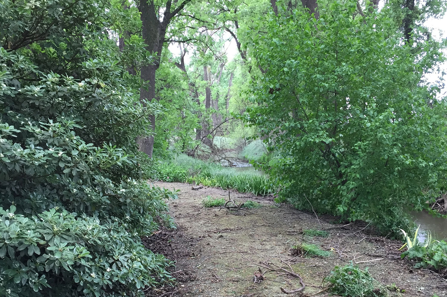 Path by Creek