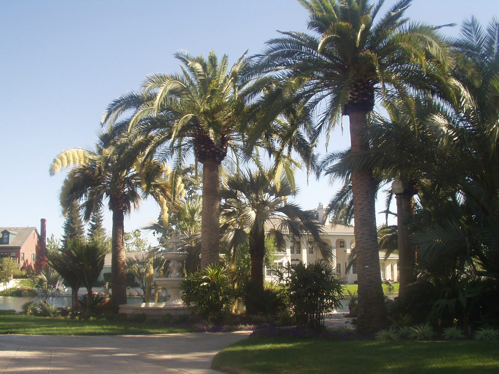 Fountain Nestled Among Stately Palm Trees
